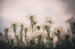 Vintage de la flor blanca Imagen de archivo