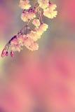 Vintage de la flor de la primavera Imagen de archivo