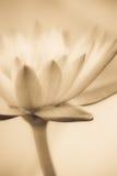 Vintage de la flor de loto Imagen de archivo