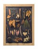 Vintage de la pizarra de la hoja del otoño de la composición de la caída Imagen de archivo