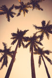 Vintage de la silueta de la puesta del sol de la palmera del coco retro Foto de archivo