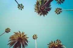 Vintage de las palmeras de Redeo Los Ángeles Imagen de archivo libre de regalías