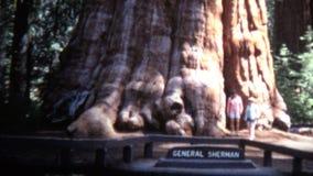 (vintage de 8mm) passage 1966 annuel de parc national de séquoia la Californie clips vidéos