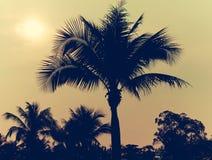 Vintage de palmiers image libre de droits