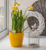 Vintage decoration window with a decorative cage and daffodils Stock Images