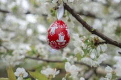Vintage Decorative red Easter egg hanging on flowering cherry tree with white flowers. Easter banner background. Vintage Decorative red Easter egg hanging on royalty free stock images