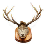 Vintage deer head. Isolated on white stock photos