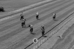 Vintage del blanco del negro de la pista de los jinetes de los caballos Fotos de archivo