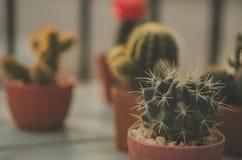 vintage del cactus imagen de archivo