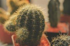 vintage del cactus fotos de archivo