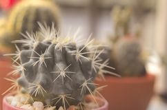 vintage del cactus foto de archivo libre de regalías