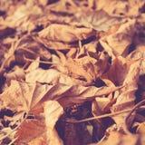 Vintage del fondo de las hojas de otoño Fotografía de archivo
