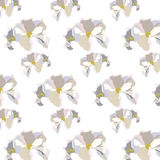 Vintage Delicate White geranium Flowers pattern Stock Photography