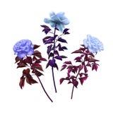 Vintage diferente de três rosas Imagens de Stock