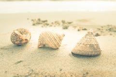 vintage do shell do mar Foto de Stock Royalty Free