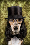 Vintage dog. Retro dog with stove pipe hat and glasses Stock Photography