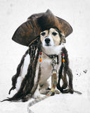 Vintage Dog. Vintage effect Jack Russell dog wearing pirate hat Royalty Free Stock Image