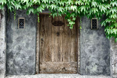Vintage door. Covered by lianas stock photography