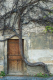 Vintage door and old crooked tree. In downtown Prague stock photography