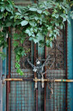 Vintage door and overgrown plant Stock Photo
