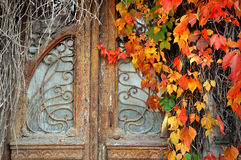 Vintage door in the overgrown with wild grapes Stock Photo