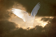 Vintage dove abstract background Stock Photos