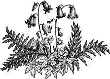 Vintage drawing of flowers and leaves Royalty Free Stock Photography