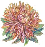 Vintage drawing of flowers Royalty Free Stock Photography