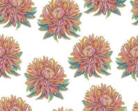 Vintage drawing of flowers Stock Photo