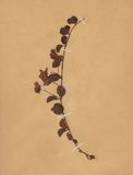 Vintage dried flower on paper dated 1896 Royalty Free Stock Photography