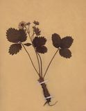 Vintage dried foliage flower on paper dated 1896 Royalty Free Stock Photography
