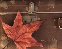Vintage Dusty Suitcase. Detail of forgotten unlocked vintage dusty suitcase with red dry autumn maple leaf Stock Images