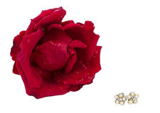 Vintage earrings and a red rose Royalty Free Stock Photo