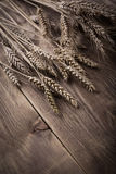 Vintage ears of wheat Stock Images