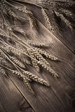 Vintage ears of wheat Royalty Free Stock Photos