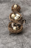 Vintage easter decoration bird in nest eggs Royalty Free Stock Images