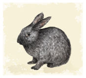 Vintage Easter  greeting card with bunny. Royalty Free Stock Image