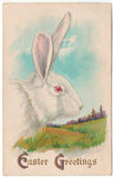 Vintage Easter Greetings White Rabbit Postcard royalty free stock photos