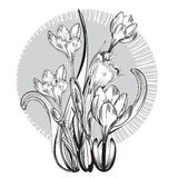 Vintage elegant flowers. Black and white vector illustration. Botany. Stock Images