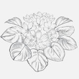Vintage elegant flowers. Black and white vector illustration. Botany. Royalty Free Stock Image