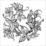 Vintage elegant flowers. Black and white vector illustration. Honeysuckle flower. Botany. Royalty Free Stock Photo