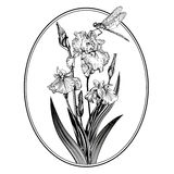 Vintage elegant flowers. Black and white vector illustration. Iris flower. Botany. Royalty Free Stock Image