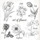 Vintage elegant wedding invitation with summer flowers. Black and white  illustration. Stock Photo