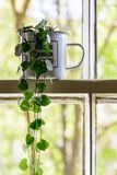 Vintage enamel mug with a green plant inside on a white sash window frame with trees on the background. stock images