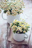 Vintage enamel mugs with chamomile Royalty Free Stock Image