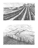 Vintage engraved, hand drawn vineyards landscape, tuskany fields, old looking scratchboard Royalty Free Stock Photography