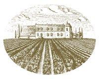 Vintage engraved, hand drawn vineyards landscape, tuskany fields Royalty Free Stock Photo