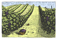 Vintage engraved, hand drawn vineyards landscape, tuskany fields, old looking scratchboard or tatooo style Stock Photo