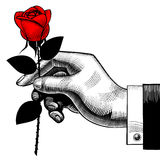 Vintage engraving drawing of hand with a red rose Royalty Free Stock Photos