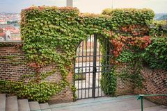 Vintage entrance grill door in brick wall between green leaves.  Stock Photography